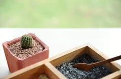Kaktus im Blumentopf und im Behälter des bunten feinen Steins oder Korn für das Herstellen des schönen Blumentopfs Lizenzfreie Stockfotografie