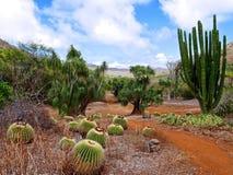 Kaktus im botanischen Garten stockfotos