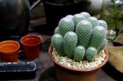 Kaktus im braunen Topf mit Gartenanordnung Lizenzfreie Stockfotografie
