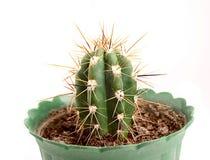 Kaktus im Flowerpot Lizenzfreie Stockbilder