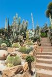 Garten der exotischen Anlagen Pallanca Lizenzfreies Stockbild