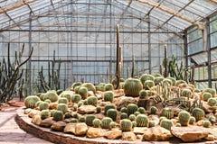Kaktus im Gewächshaus stockfotografie