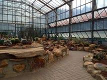 Kaktus im Glashaus Lizenzfreie Stockfotografie