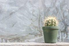Kaktus im grünen Topf auf grauer Betonmauer Stockbilder