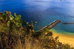 Kaktus im Hintergrund des Ozeans stockbild