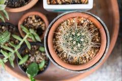 Kaktus im kleinen Garten Stockbilder