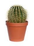 Kaktus im Potenziometer. lizenzfreie stockbilder