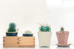 Kaktus im Potenziometer Stockbilder