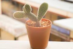 Kaktus im Sonnenschein Lizenzfreies Stockbild