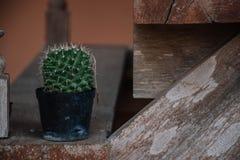 Kaktus im Topf auf altem hölzernem Brett lizenzfreies stockfoto