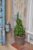Kaktus im Topf auf dem Fensterbrett Stockbild