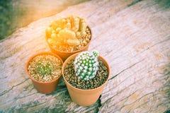 Kaktus im Topf auf hölzerner Tabelle Lizenzfreie Stockfotos
