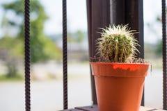 Kaktus im Vase Lizenzfreie Stockfotografie