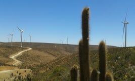 Kaktus im Windpark Stockbilder