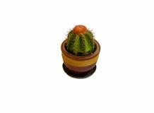 kaktus isolerad kruka Royaltyfri Bild