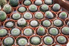 kaktus isolerad kruka Arkivbilder
