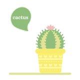 kaktus isolerad kruka Symbol av kaktusblomman Spring är här igen Arkivfoto