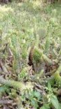 Kaktus klein Lizenzfreie Stockfotografie
