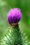 kaktus kwiat Obraz Royalty Free