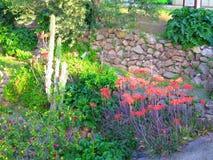 kaktus kwitnie czerwień Zdjęcia Royalty Free