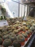 Kaktus lantgård Royaltyfri Fotografi