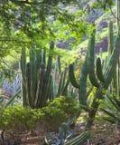 kaktus las obrazy stock