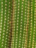 Kaktus-Makrobeschaffenheiten autsch Lizenzfreie Stockfotos