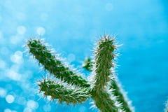 Kaktus med många taggar och ett blått hav Royaltyfri Foto