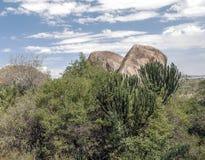 Kaktus med stora stenar Royaltyfri Bild