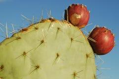 Kaktus mit Blumen Stockbild