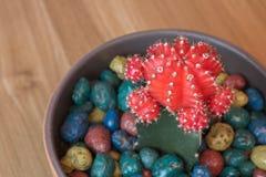 Kaktus mit einer roten Kappe stockbild