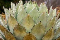 Kaktus mit Eis Stockbild