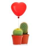 Kaktus mit gelesenem Herzballon Lizenzfreie Stockfotos