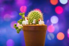 Kaktus mit kleinem Huhn im süßen Hintergrund Stockfotos