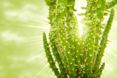 kaktus mitt emot sunen stock illustrationer