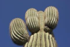 Kaktus morgens Sun Stockbilder