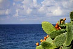 kaktus nära havet Arkivbilder