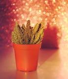 Kaktus na błyskotliwości tle Fotografia Royalty Free