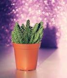Kaktus na błyskotliwości tle Obrazy Royalty Free