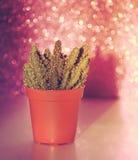 Kaktus na błyskotliwości tle Fotografia Stock