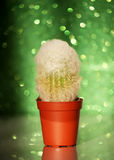 Kaktus na błyskotliwości tle Zdjęcia Royalty Free