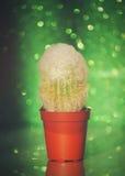 Kaktus na błyskotliwości tle Zdjęcie Royalty Free