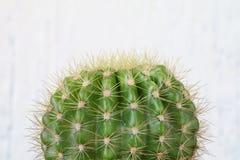 Kaktus na biały tle Zdjęcia Royalty Free