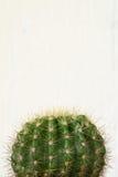 Kaktus na biały tle Fotografia Royalty Free