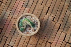 Kaktus na cegle Fotografia Royalty Free