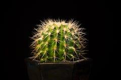 Kaktus na czarnym tle Obraz Stock