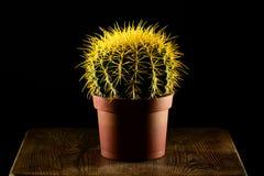 Kaktus na drewnianym stołowym zbliżeniu Obrazy Stock