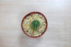 Kaktus na drewnianym stole Zdjęcie Royalty Free