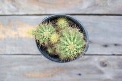 Kaktus na drewnianym stole od odgórnego widoku tła Zdjęcie Royalty Free