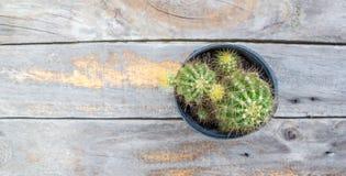 Kaktus na drewnianym stole z kopii przestrzeni tłem Fotografia Stock